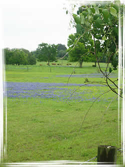 Texas A Amp M Forest Service Trees Of Texas Ecoregions