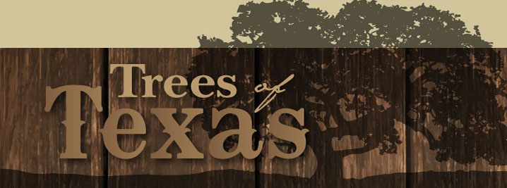 Trees of Texas Header Image, Click here to go back to the home page.