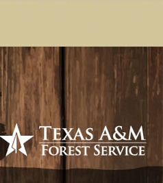 Trees of Texas Header Image, Click here to go the Texas A&M Forest Service home page.