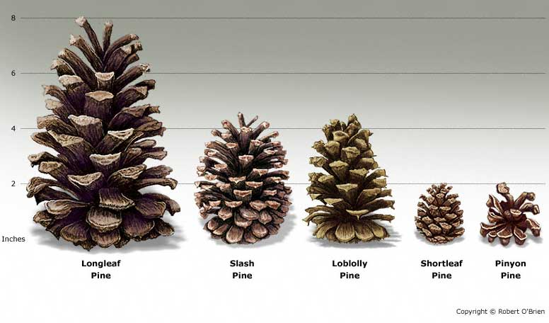 Samples of Cones
